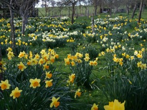 daffs good