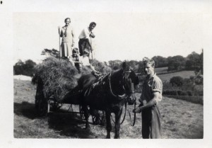 collecting hay 1930087